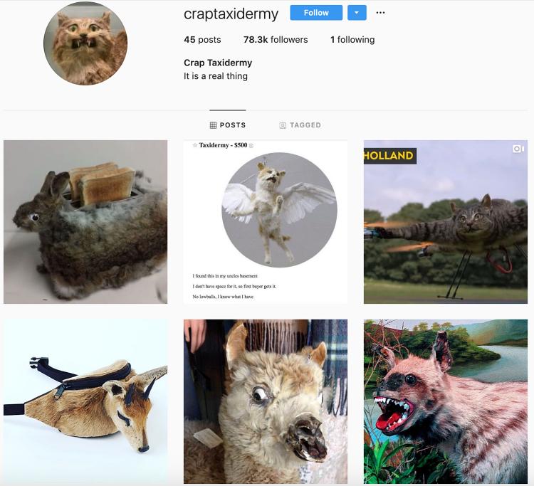 craptaxidermy instagram profile